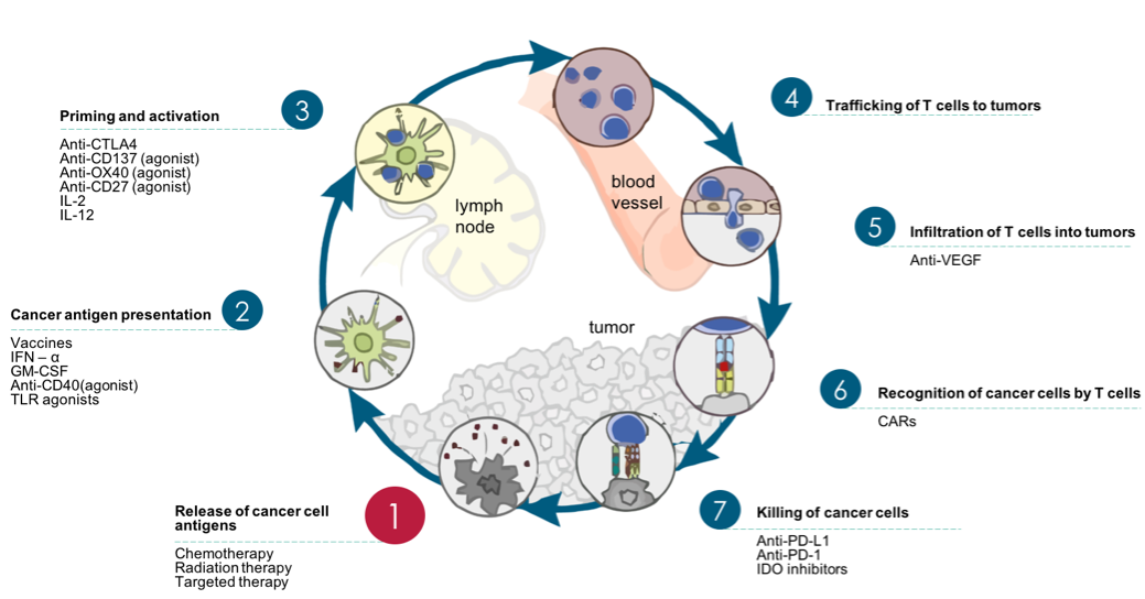 Cancer-Immunity Cycle therapy targets