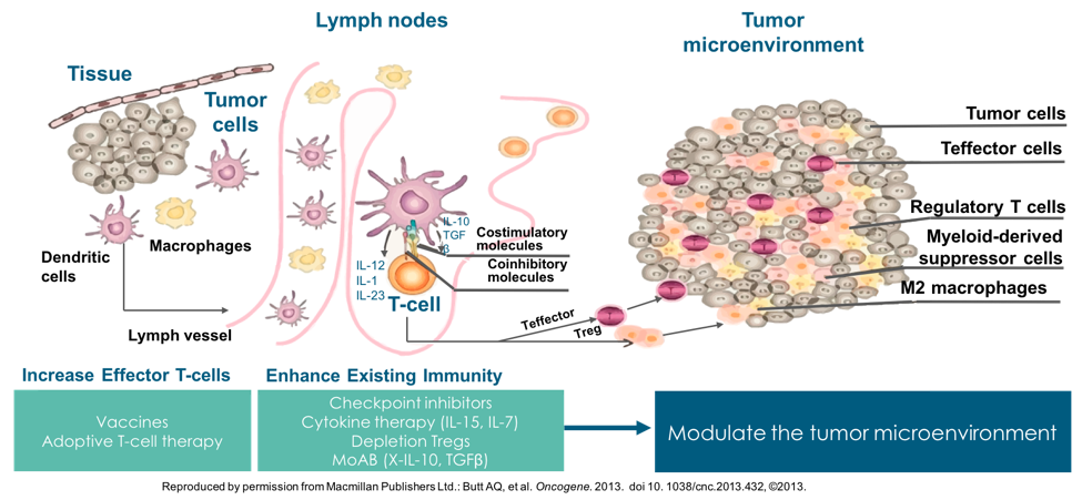 t cell activation to kill cancer cells