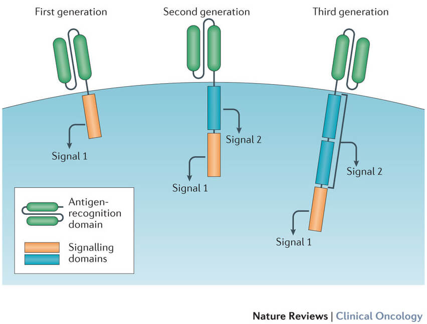 Managing The Side Effects In A Car T Cell Therapy Study